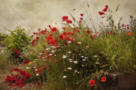 Poppy Garden Reproduction d'art