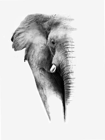 Artistic Black And White Elephant Reproduction d'art