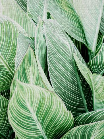 Tropica Leaves Reproduction d'art