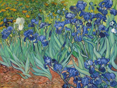 Iris Giclée