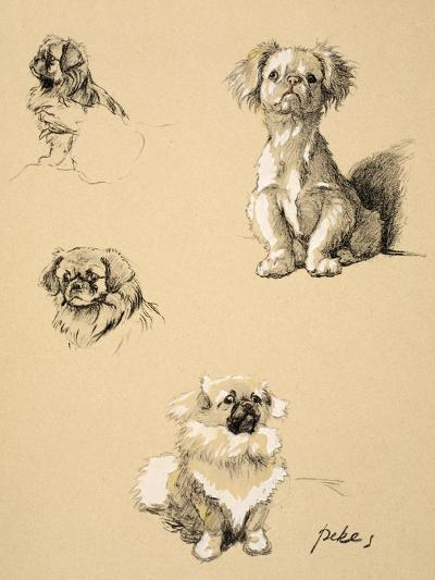 Pekes, 1930, Illustrations from his Sketch Book used for 'Just Among Friends'-Cecil Aldin-Giclee Print