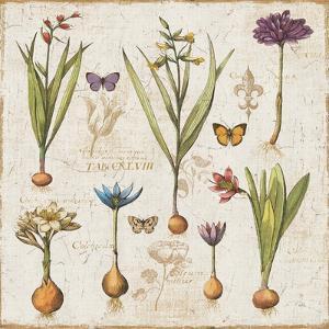 Histoire Naturelle V by Pela Design