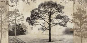 At Dawn III by Pela & Silverman