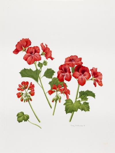 Pelargonium Geranium-Sally Crosthwaite-Giclee Print