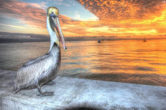 Pelican and Fire Sky-Robert Goldwitz-Photographic Print