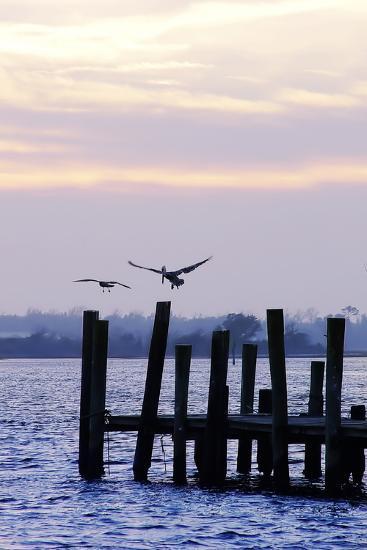 Pelican and Friend-Alan Hausenflock-Photographic Print