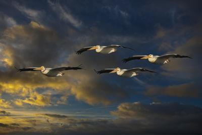 https://imgc.artprintimages.com/img/print/pelican-foursome_u-l-q1agu0q0.jpg?p=0