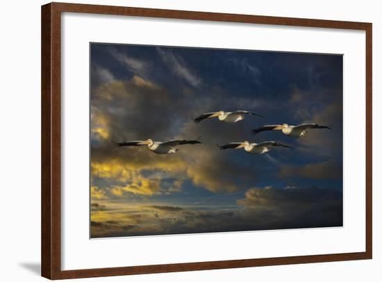 Pelican Foursome-Galloimages Online-Framed Photographic Print