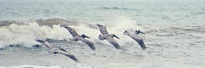 https://imgc.artprintimages.com/img/print/pelican-panel-ii_u-l-q19tca20.jpg?p=0