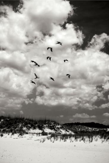 Pelicans over Dunes V BW-Alan Hausenflock-Photographic Print