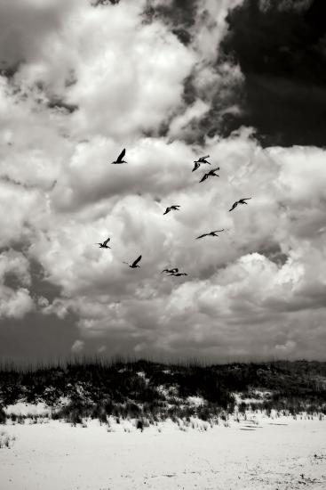 Pelicans over Dunes VI BW-Alan Hausenflock-Photographic Print