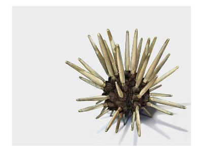 Pencil Urchin-Jane Kim-Premium Giclee Print