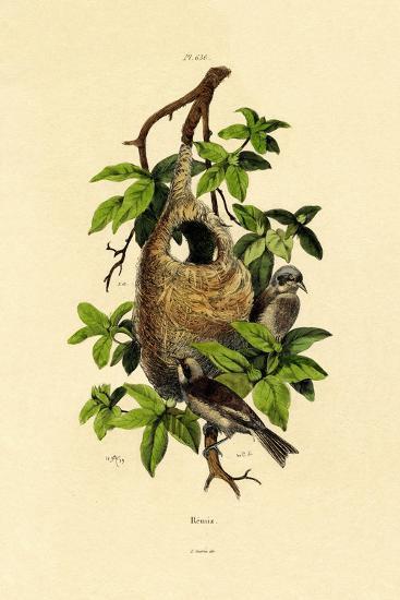 Penduline Tit, 1833-39--Giclee Print