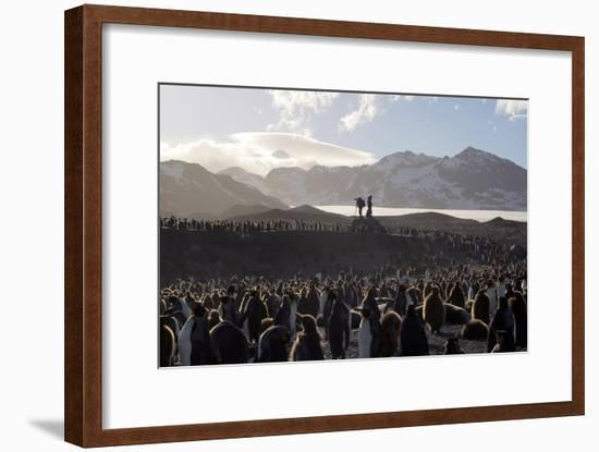 Penguin Breeding Colony Research-Charlotte Main-Framed Photographic Print
