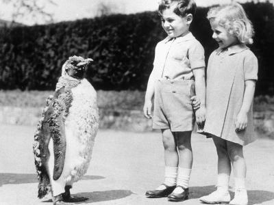 Penguin Parade--Photographic Print
