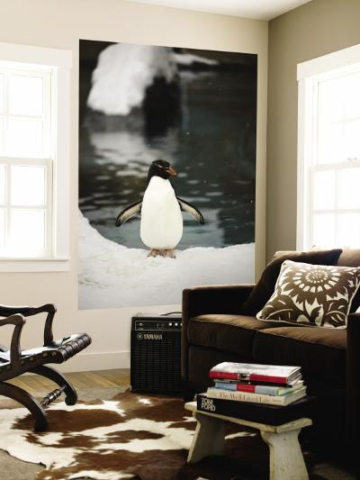 Penguin Standing Next to Pool in Snow at Asahiama Zoo-Shayne Hill-Wall Mural