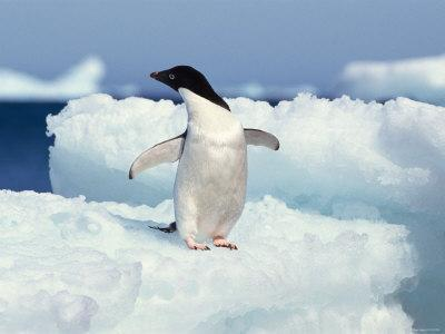 https://imgc.artprintimages.com/img/print/penguin-standing-outdoor-on-snow-covered-surface_u-l-q10x4yp0.jpg?p=0