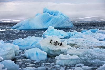 Penguins and Ice-Howard Ruby-Photographic Print