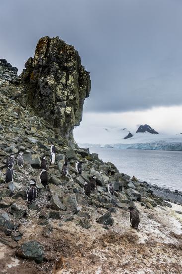Penguins below dramatic rock formations, Half Moon Bay, South Sheltand islands, Antarctica-Michael Runkel-Photographic Print