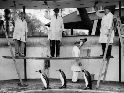Penguins Decoration--Photographic Print