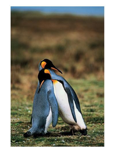 Penguins Falling Asleep--Art Print
