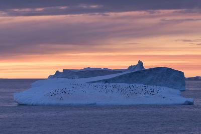 Penguins Float on an Iceberg under the Midnight Sun Just Outside Deception Island-Jeff Mauritzen-Photographic Print