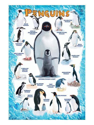 Penguins for Kids--Art Print