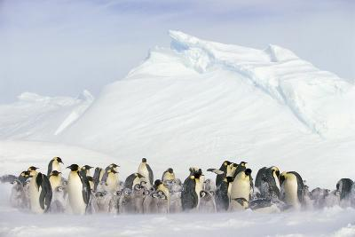 Penguins in Blowing Snow-DLILLC-Photographic Print
