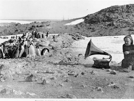 Penguins Listening to the Gramophone During Shackleton's 1907-09 Antarctic Expedition, from 'The…-English Photographer-Photographic Print