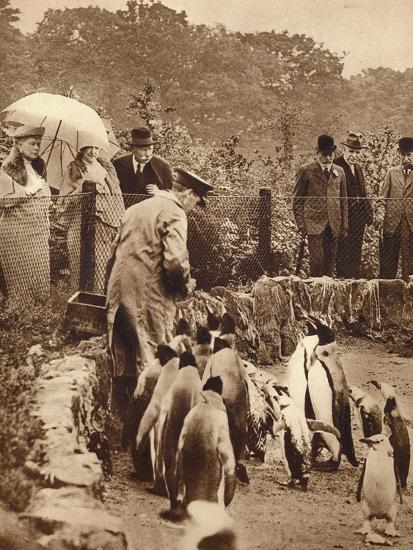 Penguins on parade for the King, 1934 (1935)-Unknown-Photographic Print