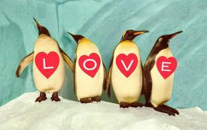 Penguins Spelling Out Love