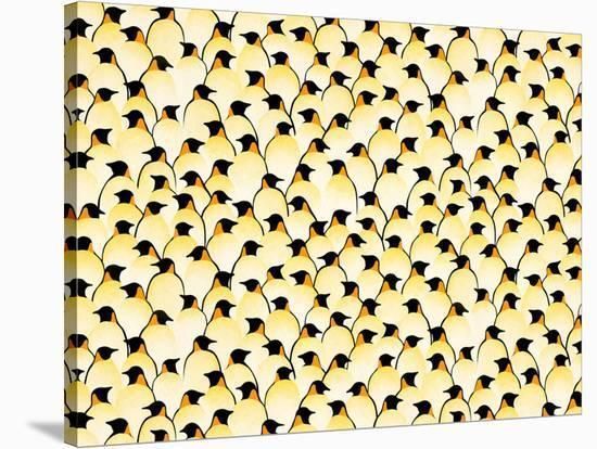 Penguins-Florent Bodart-Stretched Canvas Print