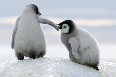 Penguins-David Yarrow Photography-Photographic Print