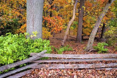 Pennsylvania, Benton. Split Rail Fence in Ricketts Glen State Park-Jay O'brien-Photographic Print