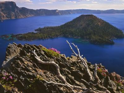 Penstemon Blooms on Cliff Overlooking Wizard Island-Steve Terrill-Photographic Print