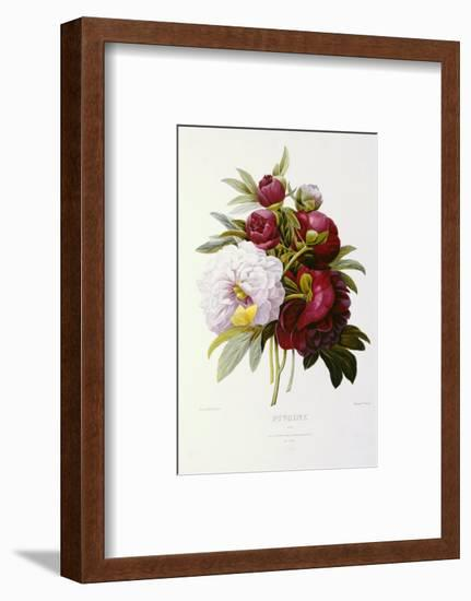 Peonies-Pierre-Joseph Redouté-Framed Premium Giclee Print