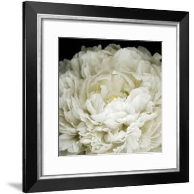 Peony 78-Doris Mitsch-Framed Photographic Print