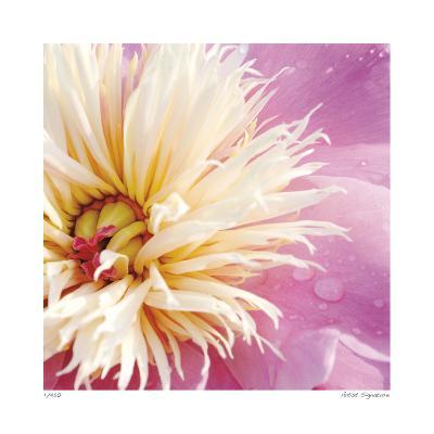 Peony Abstract-Stacy Bass-Giclee Print