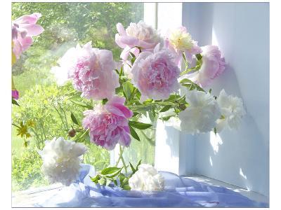 Peony Bouquet-Judy Stalus-Art Print