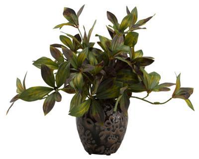 Peony Greens in Ginger Jar