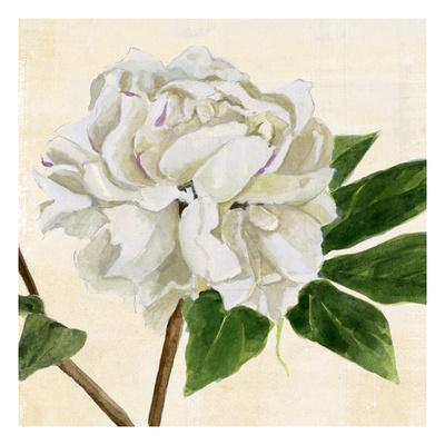 https://imgc.artprintimages.com/img/print/peony-in-bloom-ii_u-l-q1gw5vn0.jpg?p=0