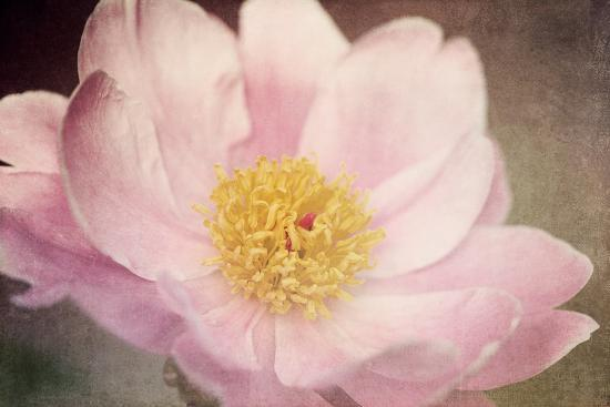 Peony in the Park-Dawn LeBlanc-Photographic Print