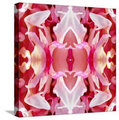 Peony Wings-Rose Anne Colavito-Stretched Canvas Print