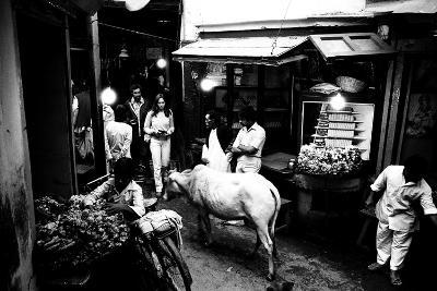 People and Cow in the Narrow Streets of Varanasi, Uttar Pradesh, India, 1982--Photographic Print
