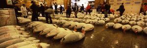 People Examining Tuna in a Fish Auction, Tsukiji Fish Market, Tsukiji, Tokyo Prefecture