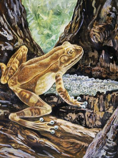 Pepper Treefrog or Veined Tree Frog (Trachycephalus Venulosus), Hylidae--Giclee Print