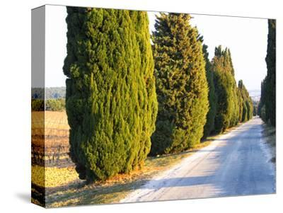Avenue Allee with Cyprus Trees to Chateau Des Fines Roches, Chateauneuf-Du-Pape, Vaucluse