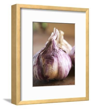Fresh Violet and White Garlic, Clos Des Iles, Le Brusc, Cote d'Azur, Var, France