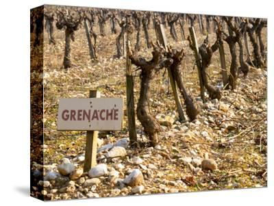 Grenache Vines in Row and Sign at La Truffe De Ventoux Truffle Farm, Vaucluse, Rhone