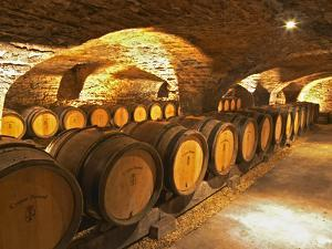 Oak Barrels in Cellar at Domaine Comte Senard, Aloxe-Corton, Bourgogne, France by Per Karlsson